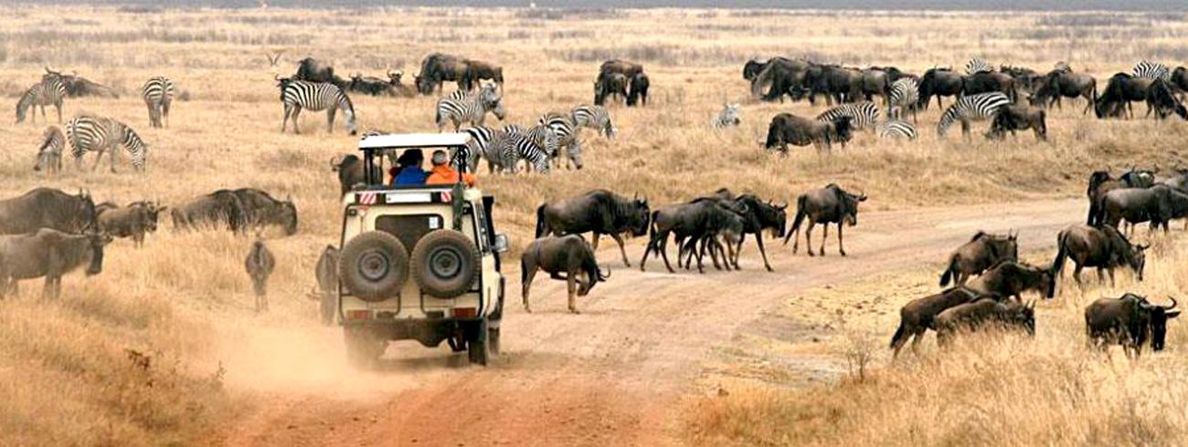 tanzania-migration-safari