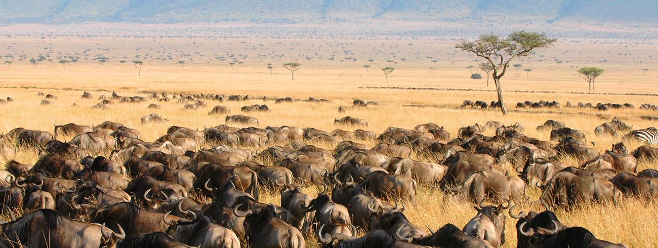 Kenya-safari-big