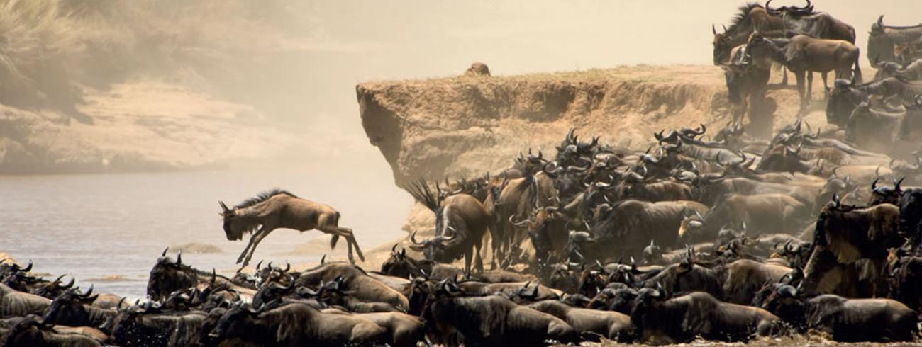 kenya-migration02