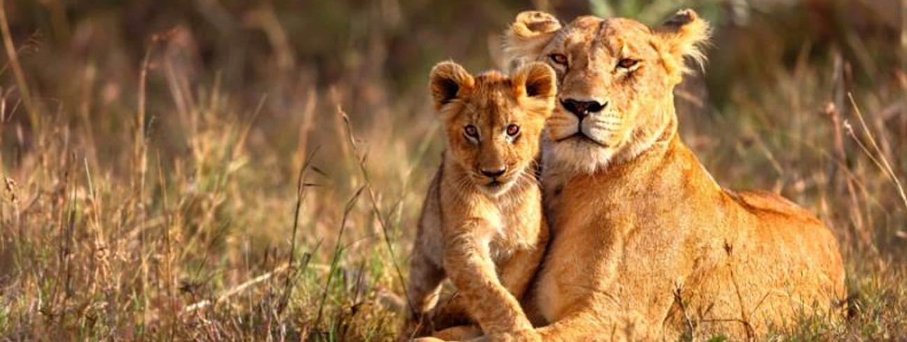 southafrica-kenya