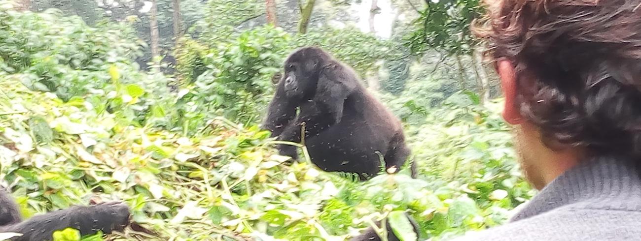 Rwanda-Gorilla-Tracking