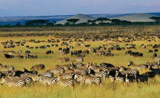 The Great Migration Safari